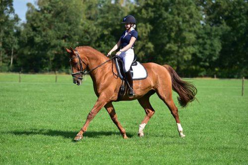 Uitslag 3e selectie paarden en overige uitslagen